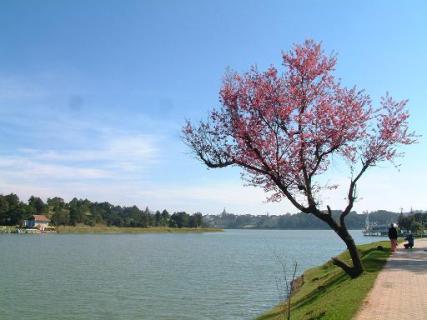Xuan-Huong-Dalat