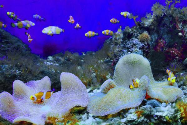 Viện Hải Dương học Nha Trang 2